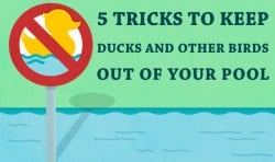 5 Tricks to Keep Ducks and Other Birds Out of Your Pool