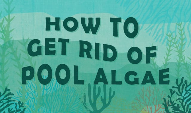 How to Get Rid of Algae in Your Pool