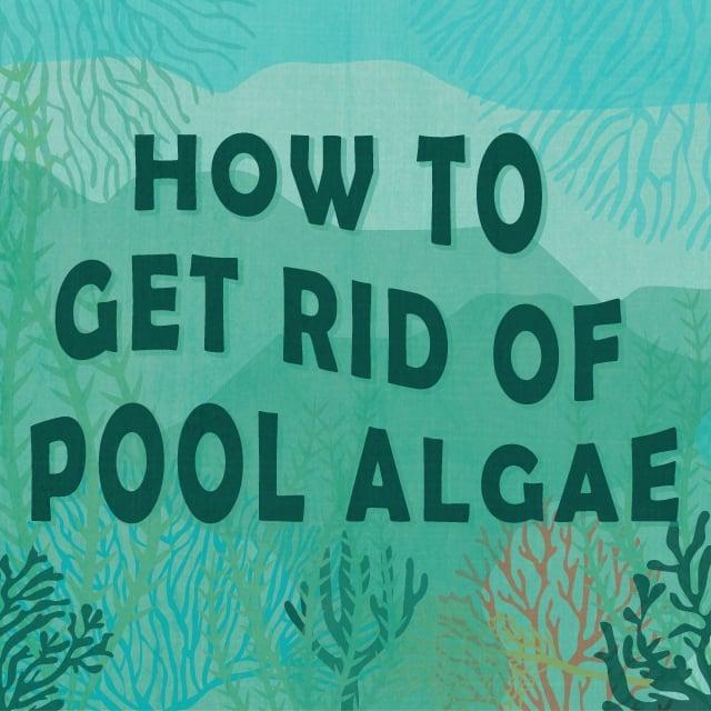 How To Get Rid Of Pool Algae