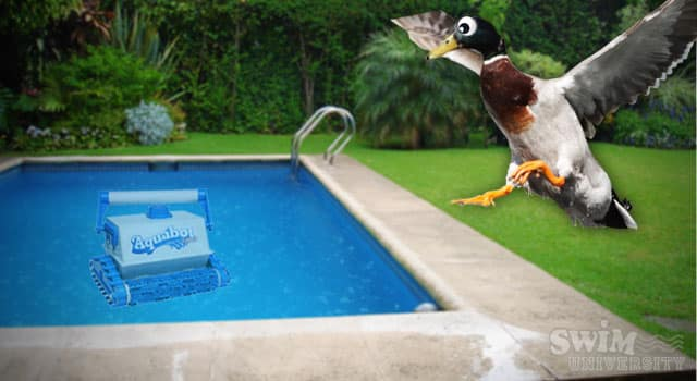 Keep Ducks Out With Pool Cleaner