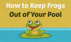 How to Keep Frogs Out of Your Pool For Good