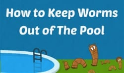 How to Keep Worms Out of The Pool