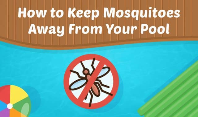 How To Keep Mosquitoes Away From Your Pool