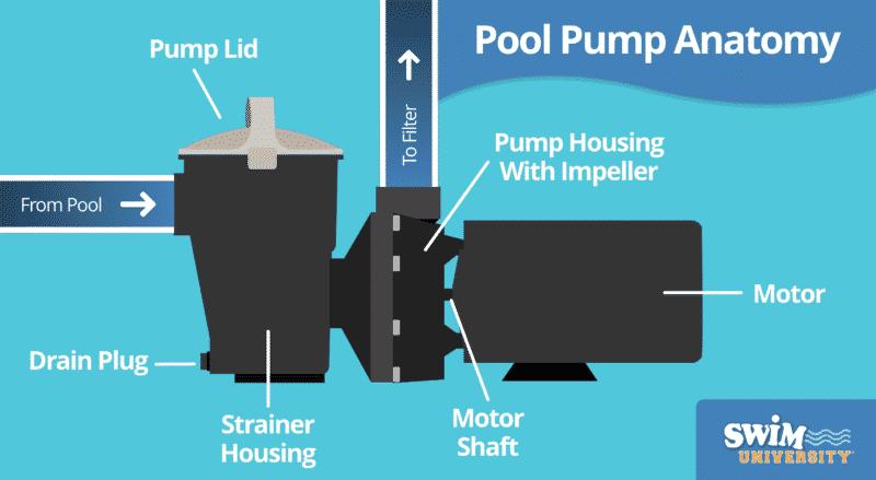 Pool Pump Anatomy
