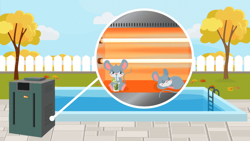 How to Keep Mice Out of Your Pool Heater