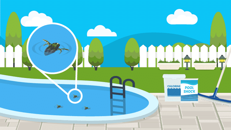 How To Get Rid Of Water Bugs In Your Pool